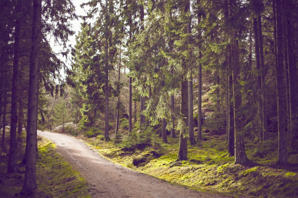 Public Domain Images - Dirt Road Green Trees Forest Hiking Trail