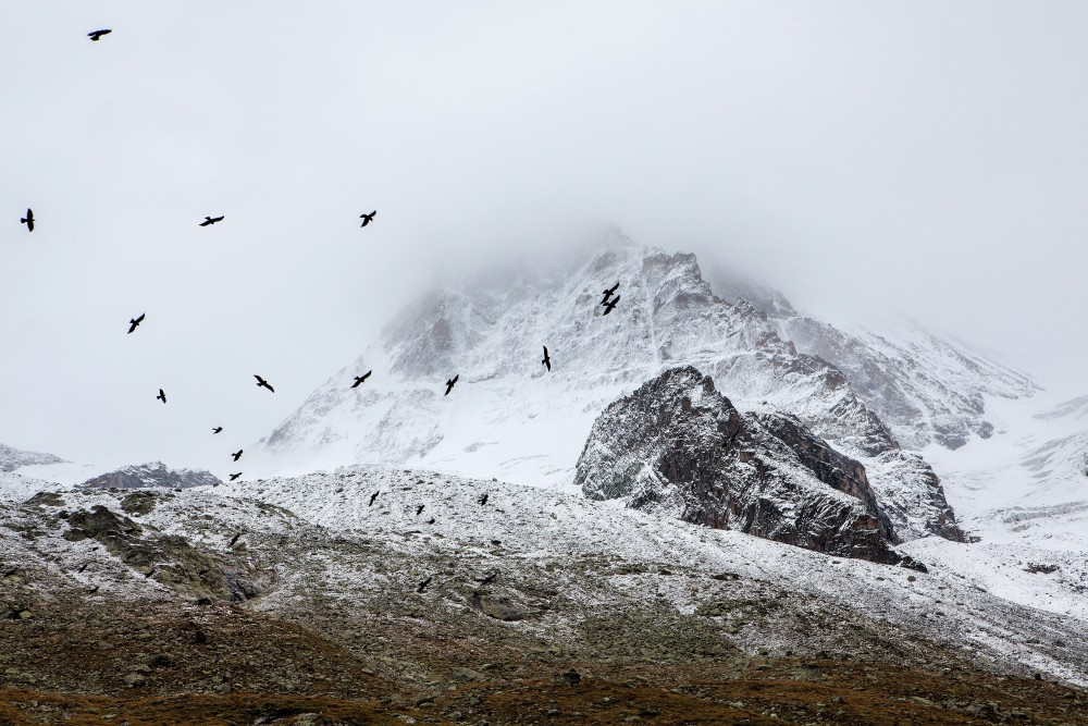 Public Domain Images - Mountains Snow Birds White Black Grey Fog