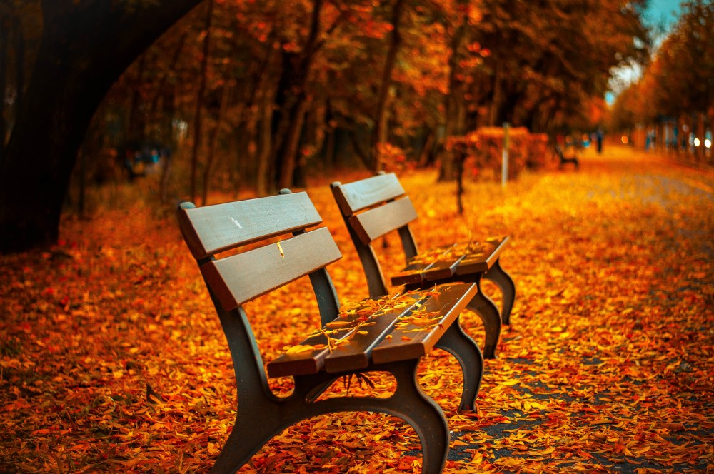 Public Domain Images – Autumn Park Bench Fall Orange Leave Trail