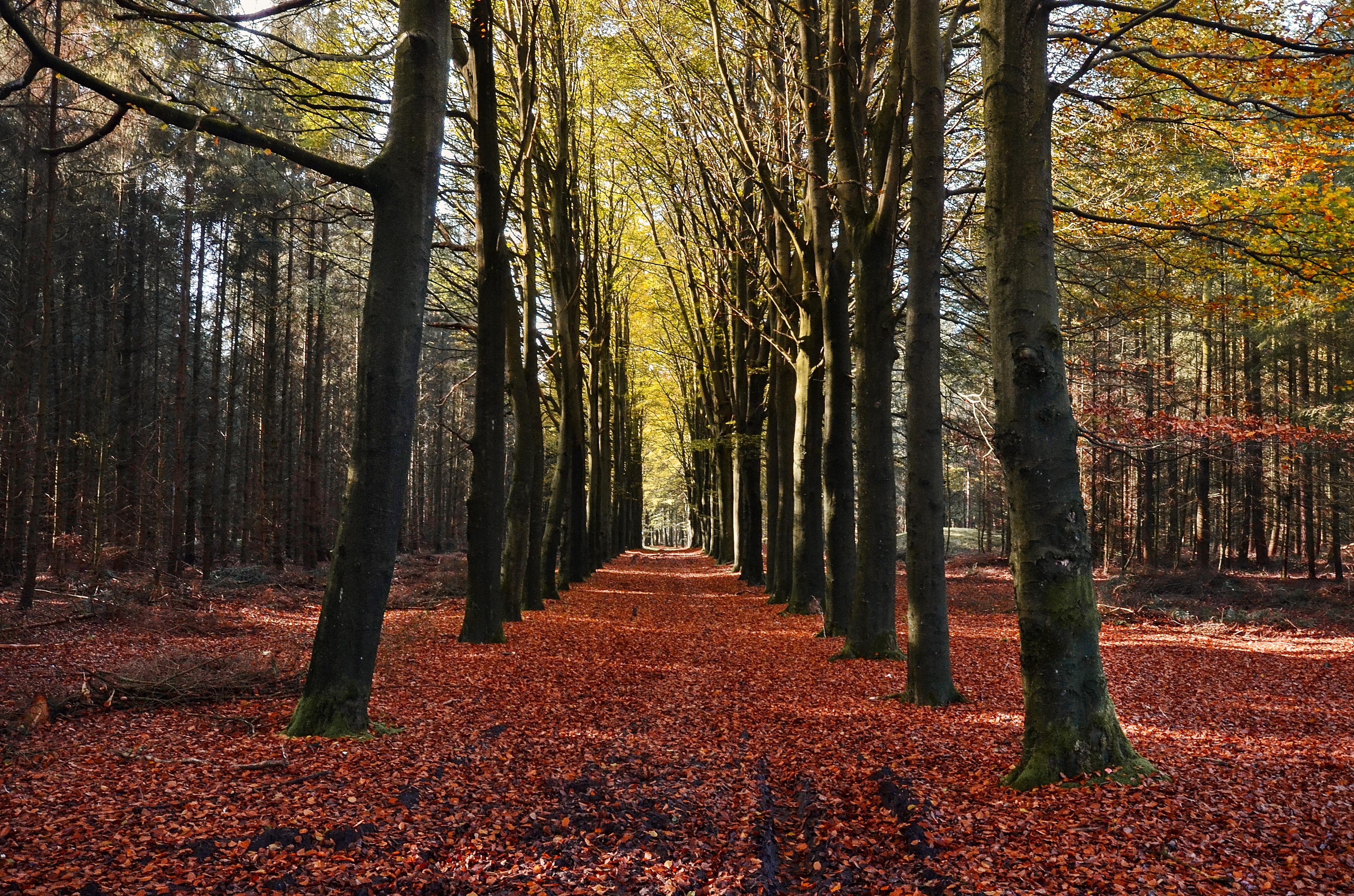 public domain images autumn orange leaves trees trail public